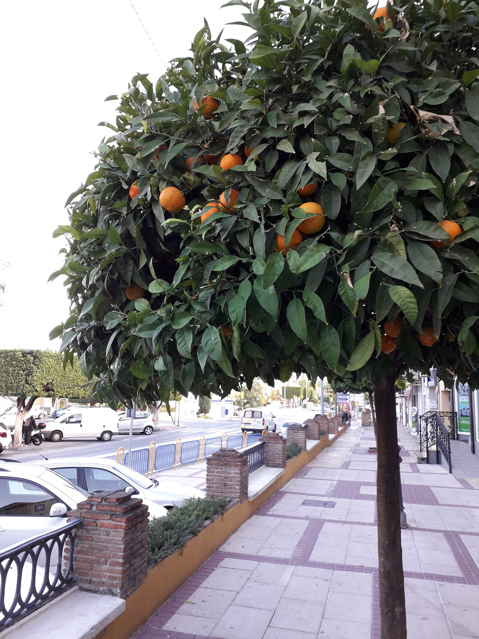 (Македонски) Ноември во Алхаурин де ла Торе